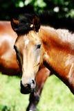 Horse. Stock Photos