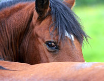 Horse. On a green grass Royalty Free Stock Photo