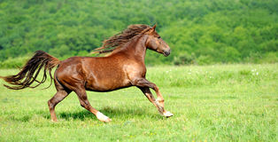 Horse. Beautiful horse in a field on blurred background Stock Image