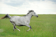 Horse. Beautiful horse in the field, blurred background royalty free stock photos