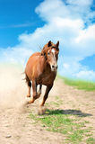 Horse. Running bay horse in the desert royalty free stock photography