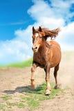 Horse. Running bay horse in the desert stock image