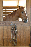 Horse. A sharp photo of a horse in the stable prepped and ready for action Stock Photo