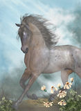 The Horse. A gorgeous brown horse galloping through a meadow Royalty Free Stock Photo