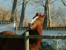 Horse. In stable Stock Images