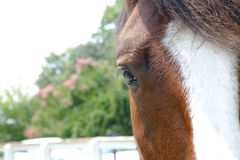 A Horse Stock Images