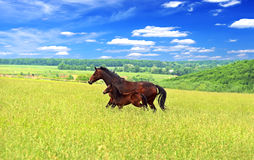 Horse. On a green grass Royalty Free Stock Photography
