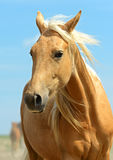 Horse. On a background blue sky Royalty Free Stock Photography