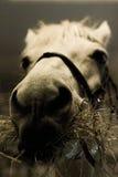 Horse Stock Image