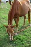A horse Stock Photo