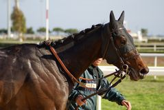 Horse. A Horse before the race with its driver Stock Photography