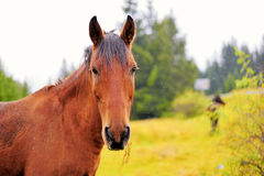Horse. In the autumn background Stock Photo