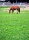 Horse. Stock Photo