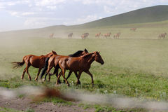 Horse. The horse is running very fast Royalty Free Stock Image
