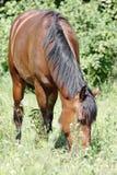 Horse. Stock Image