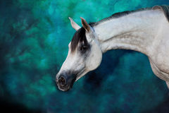 Horse. White horse on the blue background Royalty Free Stock Images
