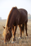 Horse. Feeding the horses on the grass stock photography