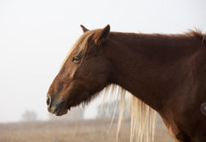 Horse. Close-up of the horse Royalty Free Stock Photos
