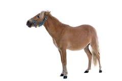 Horse. Pet horse isolated on white background Stock Images