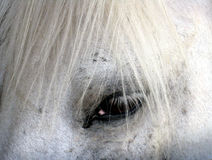 Horse 3. A white horse, detail with the eye Stock Images