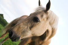 Horse. In a summers meadow Stock Image