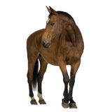 Horse. In front of a white background Stock Images