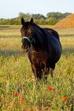 Horse4 obrazy royalty free