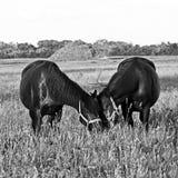 Horse4 Zdjęcia Royalty Free