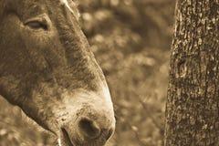 Horse. Photo of horse next to tree trunk Royalty Free Stock Photos