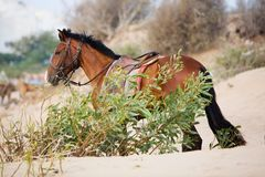 Horse. Brown horse in summer day Royalty Free Stock Photos