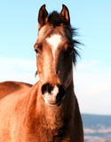 Horse. A horse Stock Photography