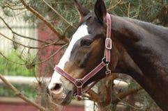Free Horse 4 Stock Photography - 955562