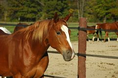Horse. A picture of a horse taken at a ranch in Indiana Stock Photo