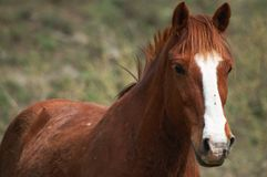 Horse. From altay Stock Photo