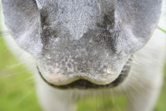 Horse. With a lovely nose royalty free stock image