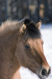 Horse. A brown horse in a countryside Stock Image
