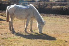 HORSE-1 免版税图库摄影