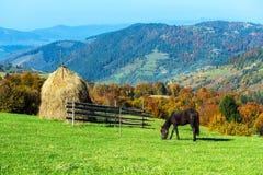 Free Horse Royalty Free Stock Photo - 48866085