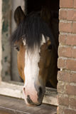 Horse. Portrait of a brown and white horse Stock Photo