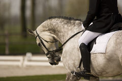 Horse. Riding in black boots on a dressage horse Stock Photo