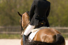 Horse. Brown dressage horse after succesfull contest Royalty Free Stock Image