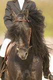Horse. Portrait of a brown dressage horse Royalty Free Stock Photography