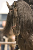 Horse. Portrait of a brown dressage horse whit long hair Stock Photography