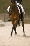 Horse. Dressage horse performing half pass Stock Photos