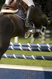 Horse. Winning horse in a dutch horse jumping contest Stock Image
