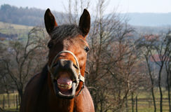 Horse. Nature, countryside, neigh, head, power, , prance Royalty Free Stock Photo