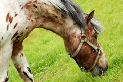 Horse #6 Stock Photo
