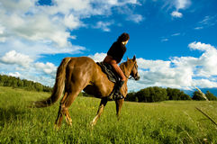 Free Horse Royalty Free Stock Photography - 6014907