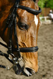 Horse. On a dressage competitions Stock Photos