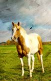 Horse. Pictorial scene with horse on pasture -artwork in painting style Stock Image
